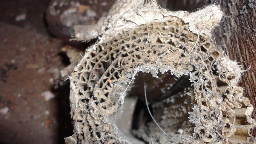 Bekend Hoe asbest herkennen? WZ04